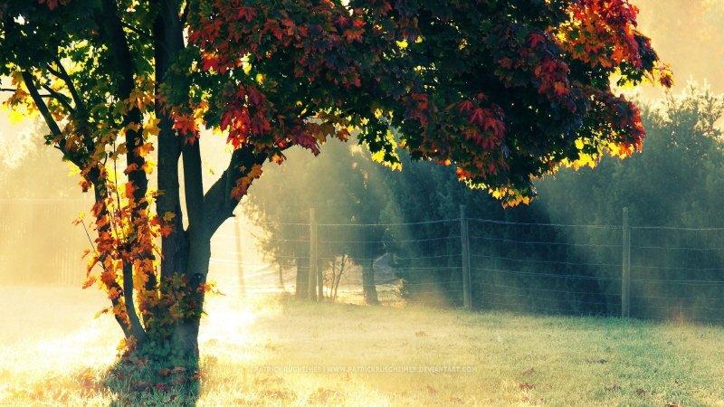 크기변환_autumn_morning-1920x1080.jpg FHD 배경화면 (1920x1080)