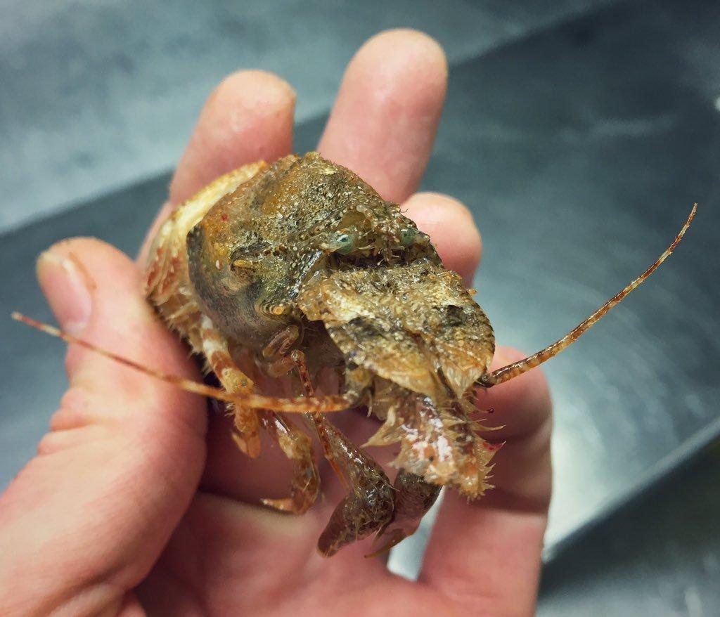 11.jpg [혐주의] 어부가 심해에서 건져 올린 물고기들