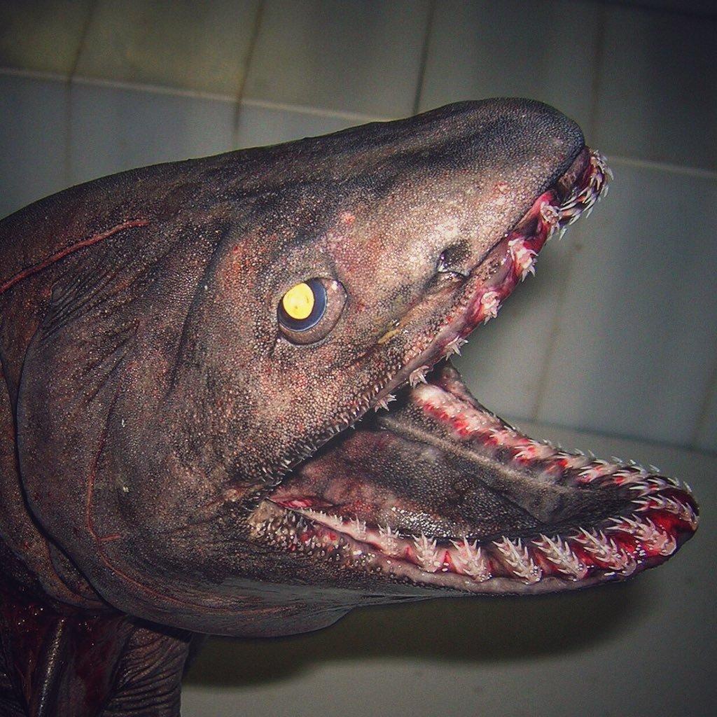 18.jpg [혐주의] 어부가 심해에서 건져 올린 물고기들