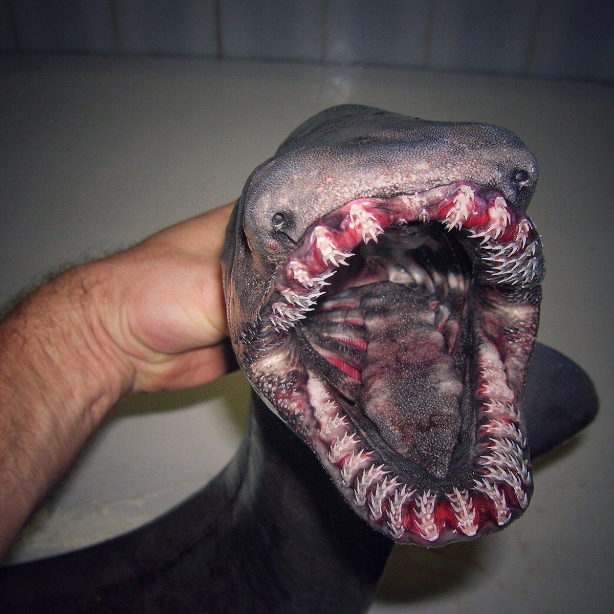 2.jpg [혐주의] 어부가 심해에서 건져 올린 물고기들