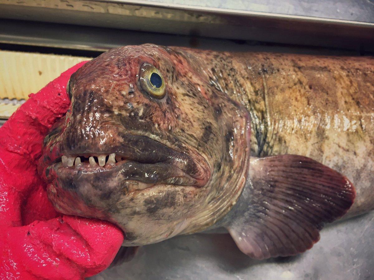 16.jpg [혐주의] 어부가 심해에서 건져 올린 물고기들