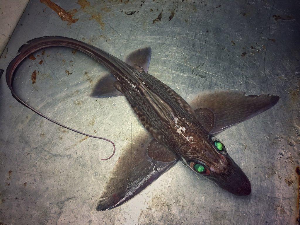 10.jpg [혐주의] 어부가 심해에서 건져 올린 물고기들