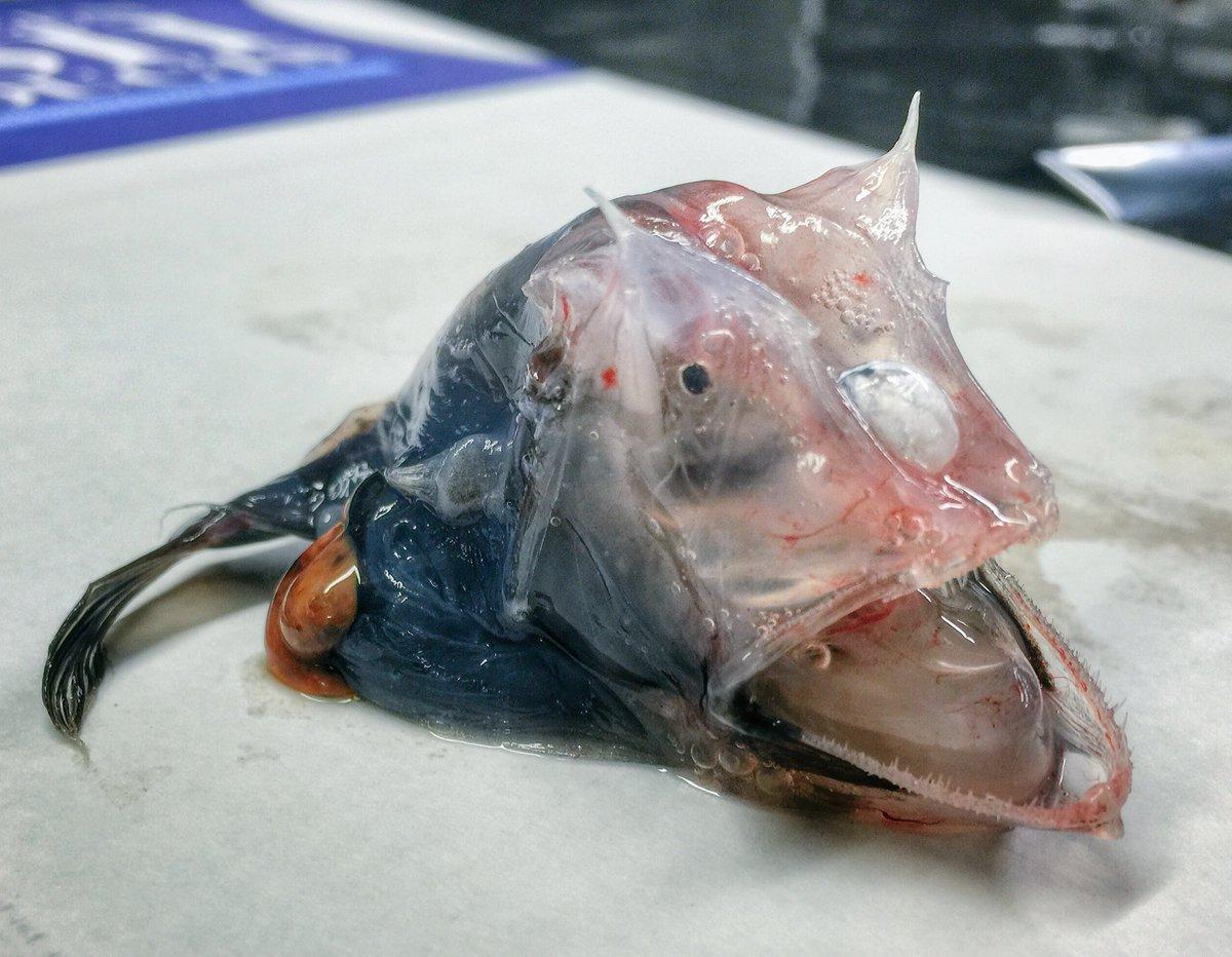 14.jpg [혐주의] 어부가 심해에서 건져 올린 물고기들