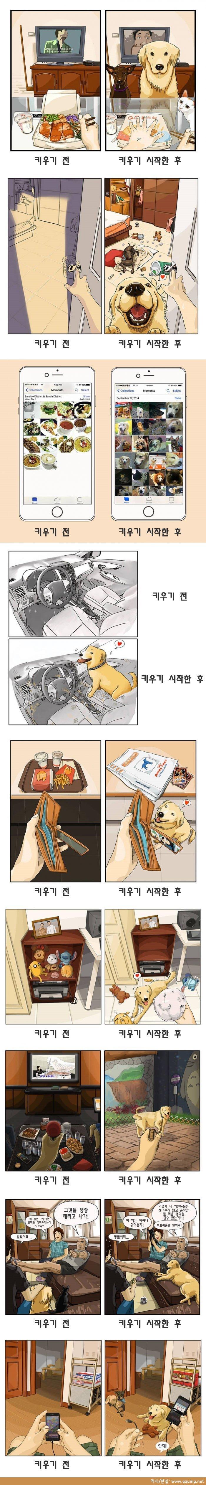 전 후.jpg 반려동물 키우기 전과 후