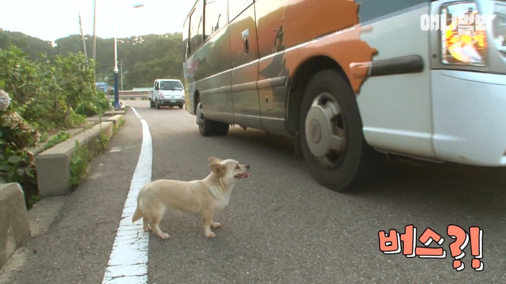 006.jpg 혼자 버스타고 지인 만나러 가는 강아지 상연이.jpg