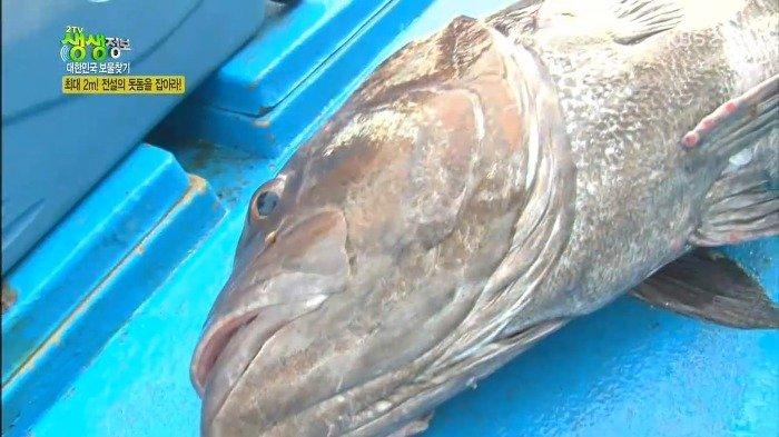 25.jpg 스압)) 전설의 심해어 돗돔