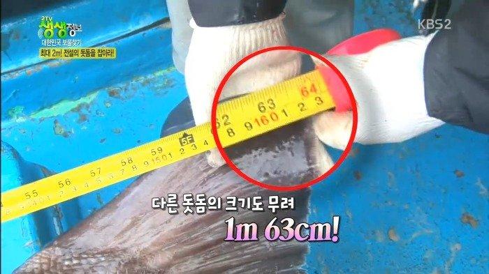 45.jpg 스압)) 전설의 심해어 돗돔