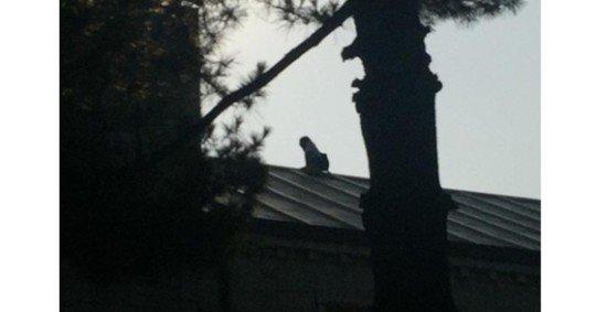 0002757828_002_20170925202005704.jpg 고대 학생과 사귀게 해달라 건물 지붕서 소동 벌인 중국 여성.jpg