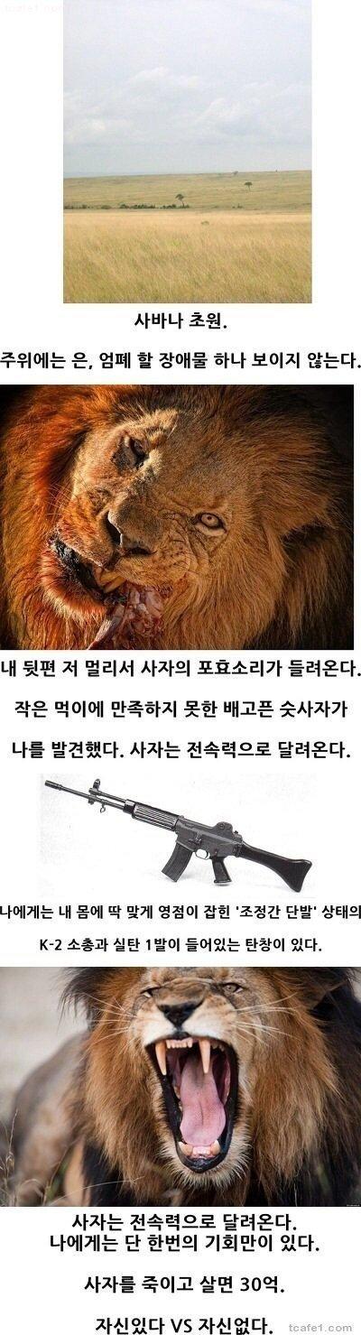 1507690322417.jpg 30억에 사자사냥 한다 vs 안한다