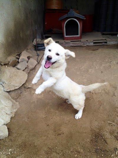 3.jpg 시골가면 강아지들이 하는 행동