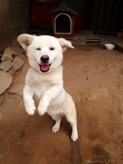 2.jpg 시골가면 강아지들이 하는 행동