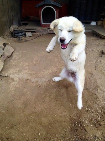 5.jpg 시골가면 강아지들이 하는 행동