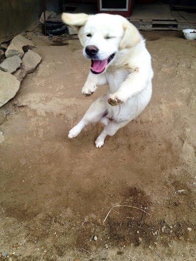 4.jpg 시골가면 강아지들이 하는 행동