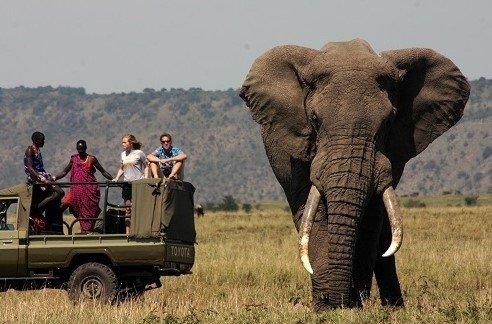 2016-12-13_18-13-28.jpg [자작] 지상최강의 동물, 아프리카코끼리의 위엄