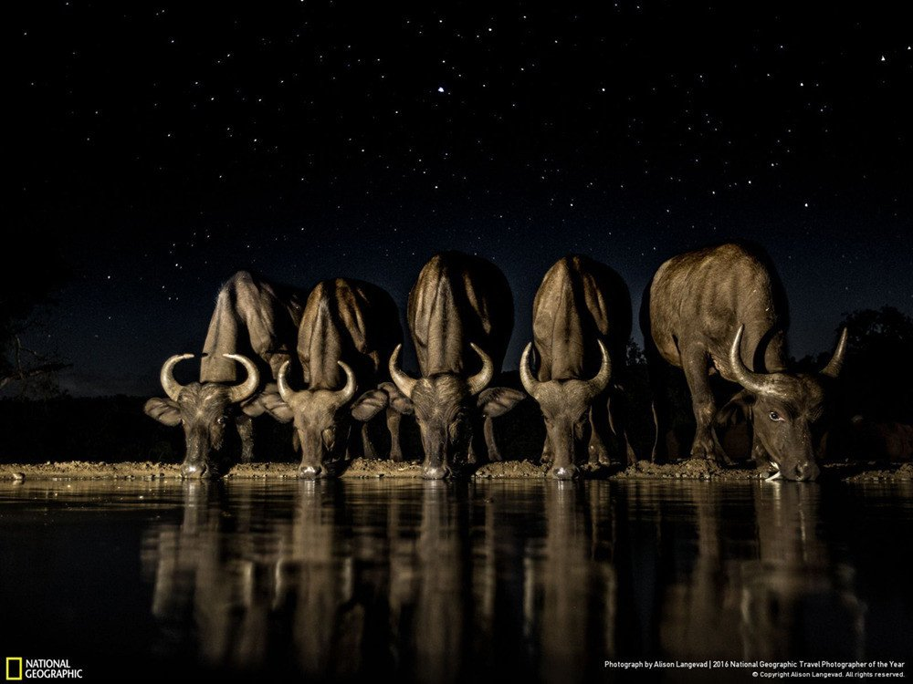 YaAOngL.jpg [자작] 지상최강의 동물, 아프리카코끼리의 위엄