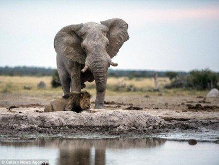 SSI_20150703133527_V_99_20150703134115.jpg [자작] 지상최강의 동물, 아프리카코끼리의 위엄