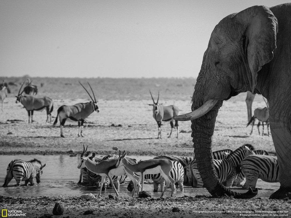 Rvg7I5L.jpg [자작] 지상최강의 동물, 아프리카코끼리의 위엄