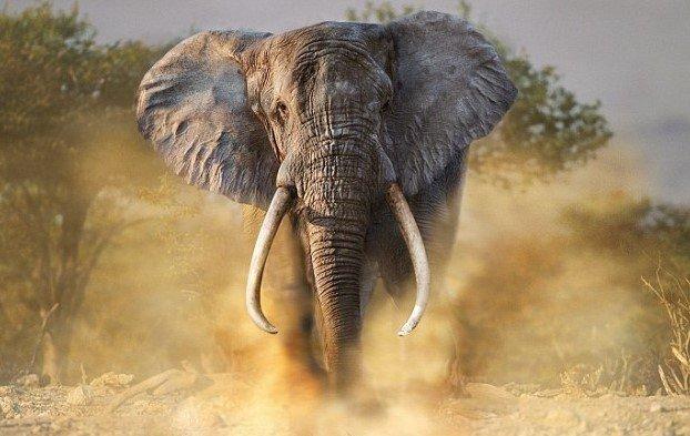 2016-12-13_18-14-04.jpg [자작] 지상최강의 동물, 아프리카코끼리의 위엄