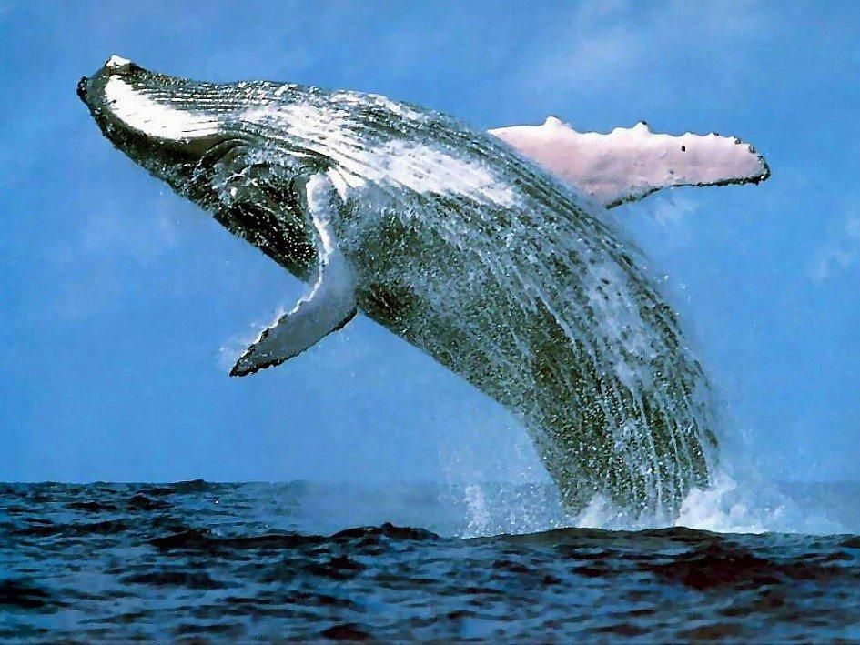 고래whale.jpg 고래 성기의 위엄