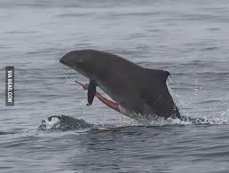 sw-1.jpg 고래 성기의 위엄