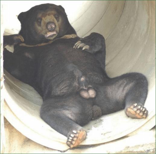 bear_fullsize.png 고래 성기의 위엄