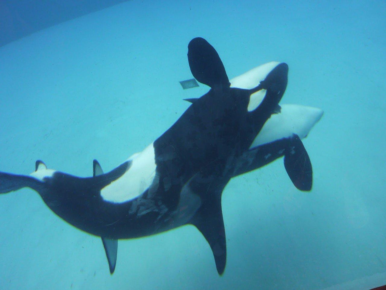 P1060100.jpg 고래 성기의 위엄