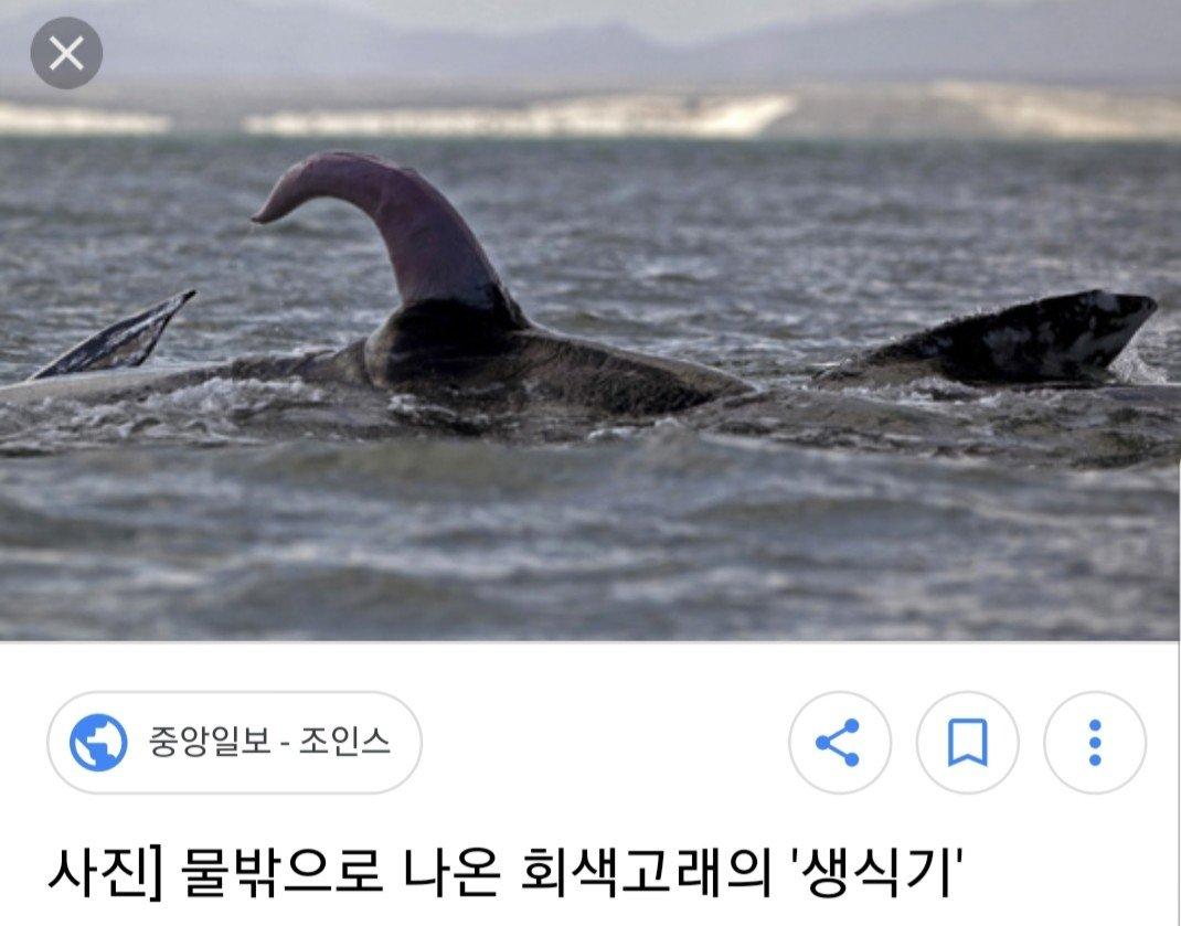 20180314_111746.jpg 고래 성기의 위엄