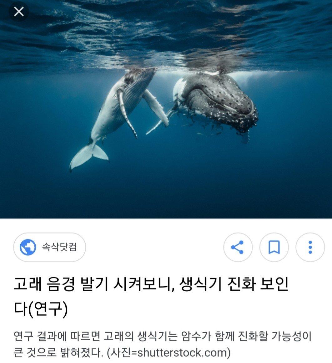 20180314_121159.jpg 고래 성기의 위엄