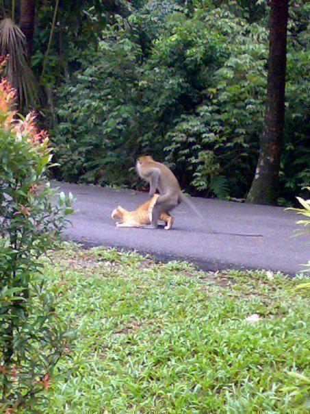 1591794bd022a7926.jpg 아기 고양이를 돌보는 원숭이