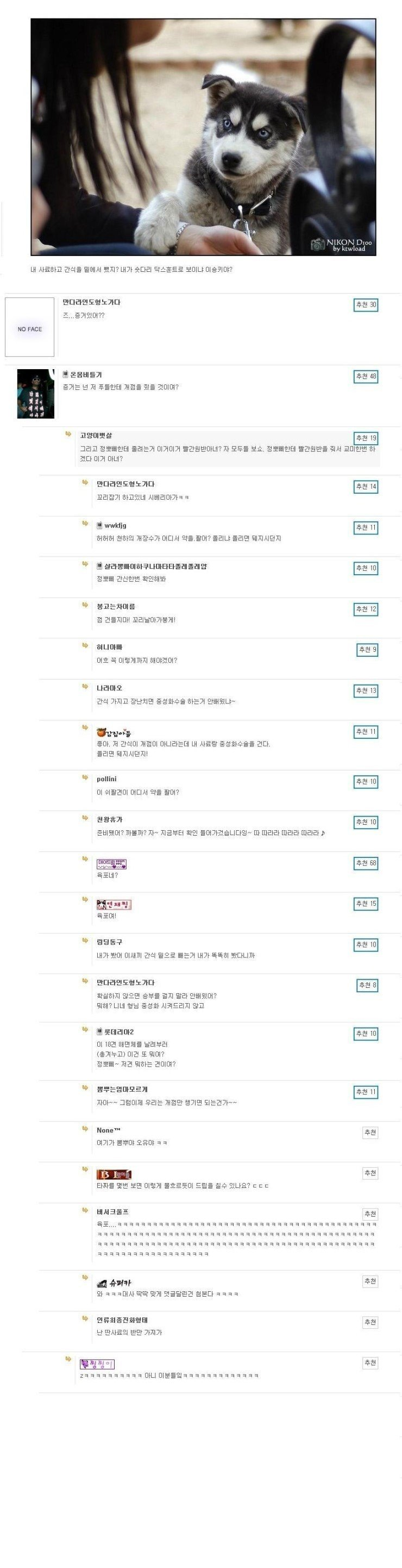 4.jpg 커뮤니티별 타짜 패러디 댓글.jpg