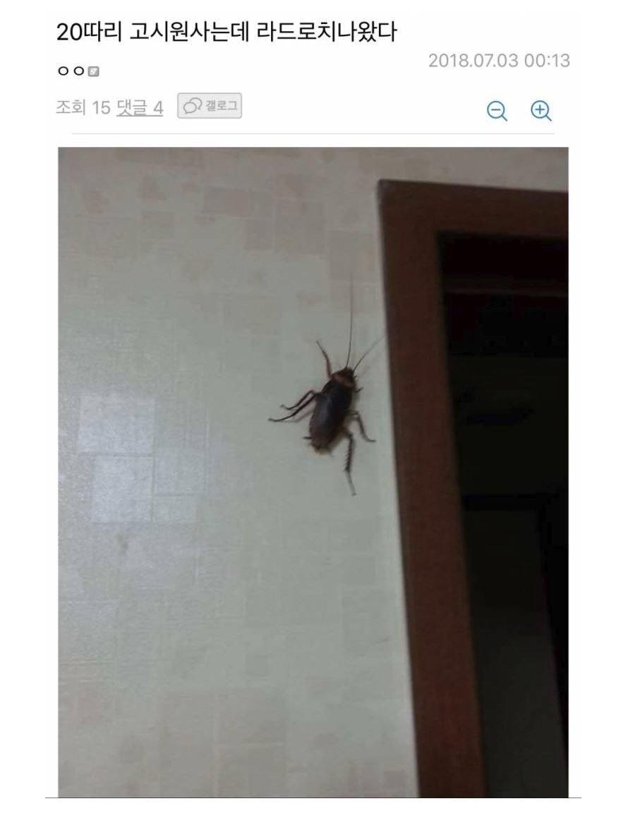 혐) 요즘 한국에 자주 보인다는 바퀴벌레