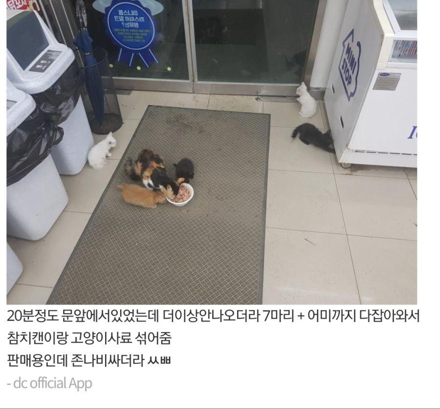 rhdiddl2.png 고양이 가족 납치한 갤러