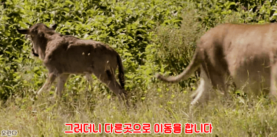 19.PNG 야생 생태계에서 일어난 기적적인 재회.jpg