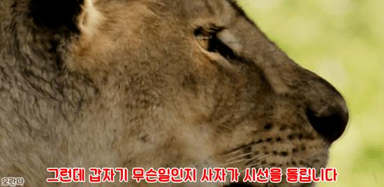 18.PNG 야생 생태계에서 일어난 기적적인 재회.jpg