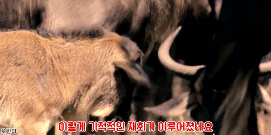 25.PNG 야생 생태계에서 일어난 기적적인 재회.jpg