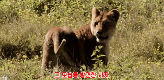 22.PNG 야생 생태계에서 일어난 기적적인 재회.jpg