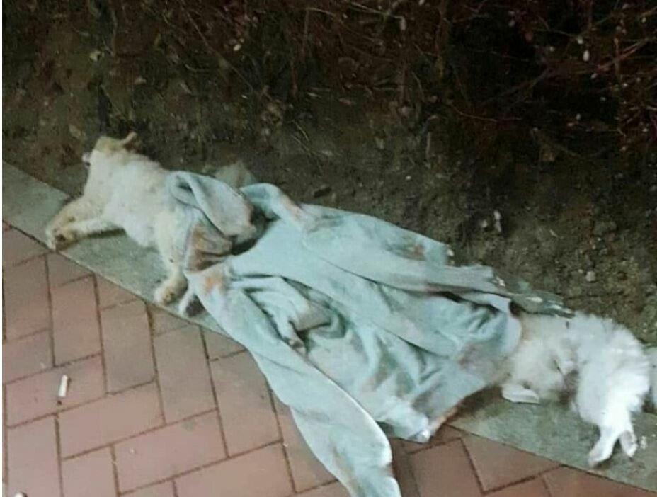 (혐오)부산 오피스텔에서 키우던 강아지 던졌다고함