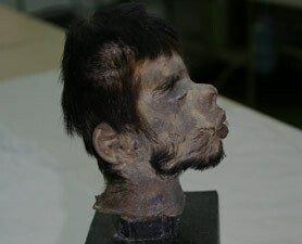 head-278.jpg 약혐) 시체의 머리를 방부처리해서 기념품으로 보관하는 풍습.jpg