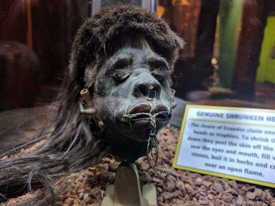 a-real-shrunken-head.jpg 약혐) 시체의 머리를 방부처리해서 기념품으로 보관하는 풍습.jpg