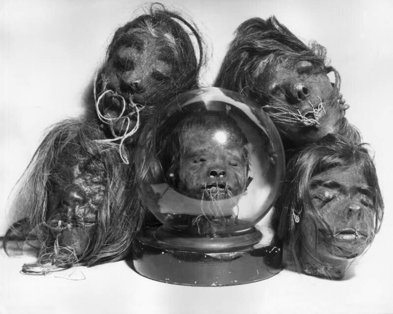 group-of-heads.jpg 약혐) 시체의 머리를 방부처리해서 기념품으로 보관하는 풍습.jpg