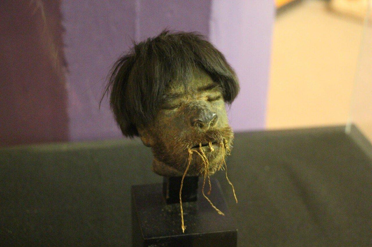 IMG_1301.JPG 약혐) 시체의 머리를 방부처리해서 기념품으로 보관하는 풍습.jpg