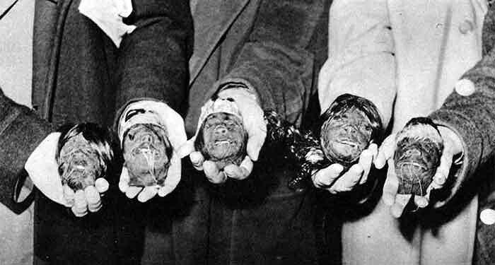 shrunken-heads-1.jpg 약혐) 시체의 머리를 방부처리해서 기념품으로 보관하는 풍습.jpg