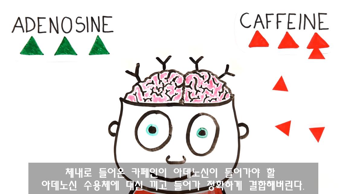 캡처_2019_03_29_11_27_48_216.png 낮잠잘때 커피를 마시면 좋은 이유. 커피냅(CoffeeNap)