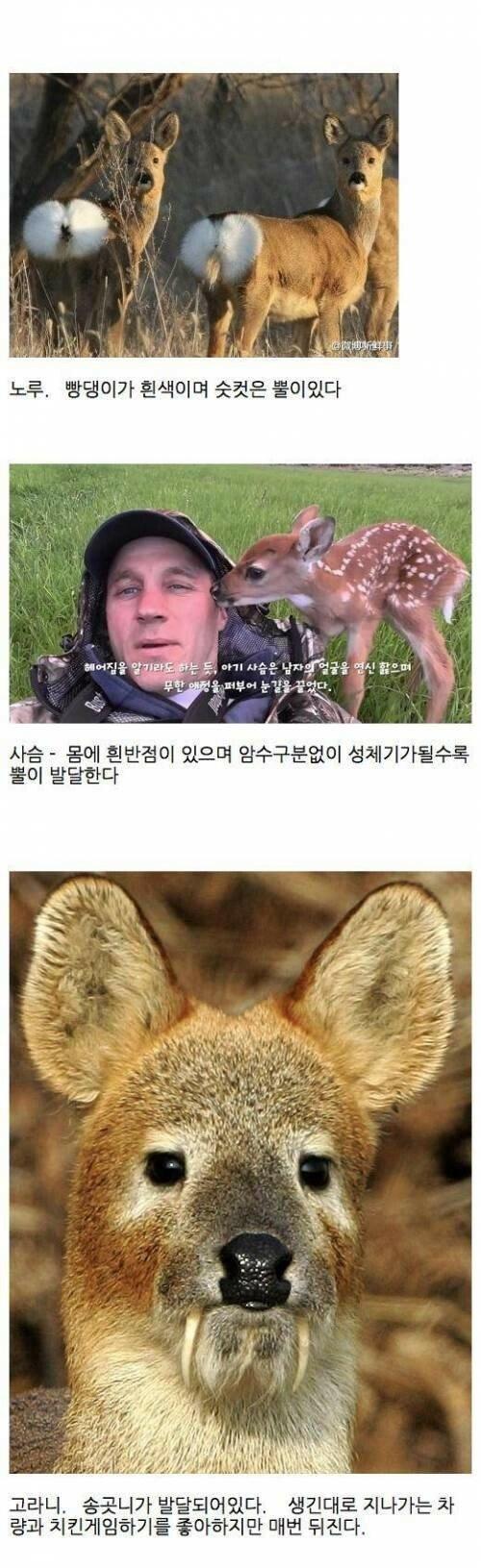 1.jpg 노루, 사슴, 고라니 구별하는법