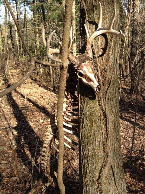 cf11a0e53167371fd87dd9163aaf4987.jpg 혐)죽기만을 기다렸을 동물의 사체.jpg