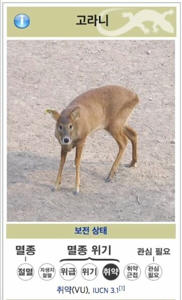 고란1.JPG 한반도에만 있는 멸종위기 종.jpg