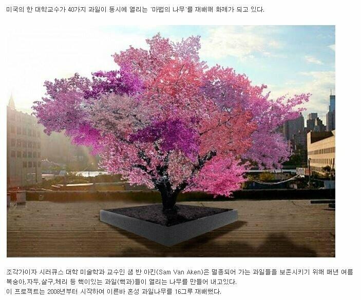 20190417124055_a4a85ec7cebd8608c062fc9e1984a625_0s8q.jpg 40가지 과일이 동시에 열리는 마법의 과일 나무