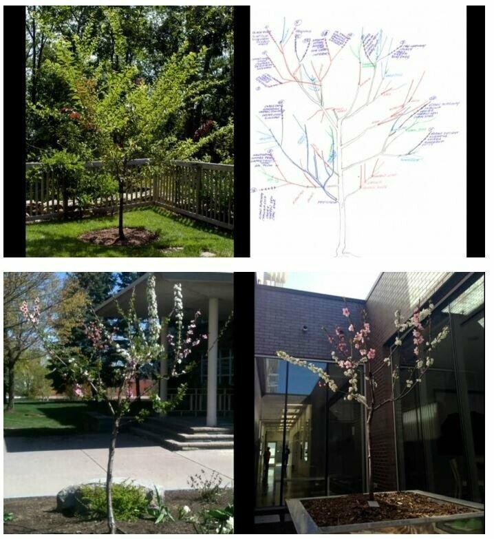 20190417124059_a4a85ec7cebd8608c062fc9e1984a625_4zic.jpg 40가지 과일이 동시에 열리는 마법의 과일 나무
