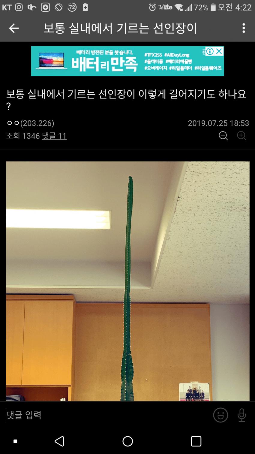 1566330127.png 식물갤 선인장 레전드...jpg