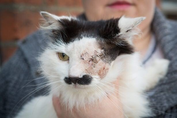b55826fcc5dd6dc1c782834c35c0e586.jpg 약혐) 히틀러 닮았다는 이유로 한쪽 눈 실명당한 고양이.jpg